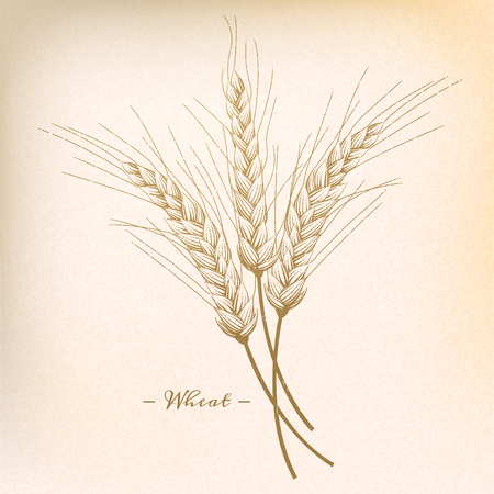 Retro wheat in engraving style, beige tone