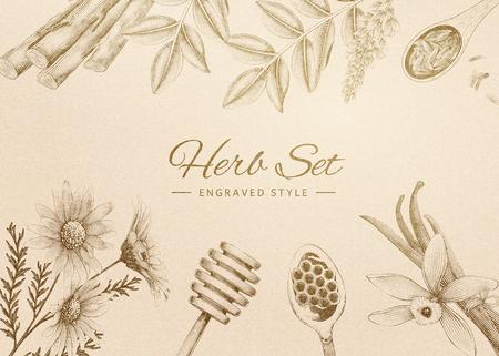 Ensemble de fines herbes gravé de style rétro sur beige
