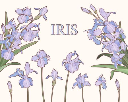 Watercolor style purple iris garden on beige background Çizim