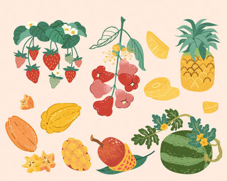 Taiwan or tropical fruit collection in doodle style. Food elements including strawberry, wax apple, pineapple, star fruit, mango, and watermelon.