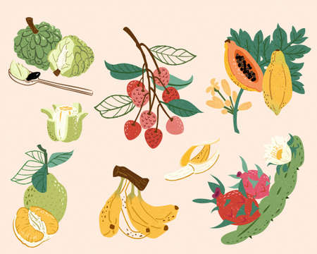 Taiwan or tropical fruit collection in doodle style. Food elements including sweet apple, lychee, papaya, pomelo, banana and dragon fruit. Stock Illustratie