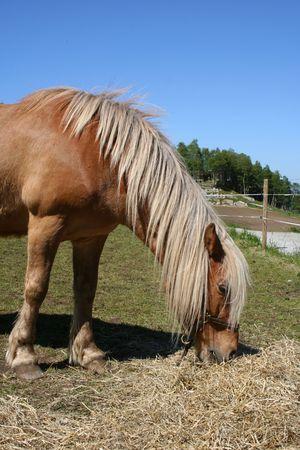 grassing: Horse grassing Stock Photo