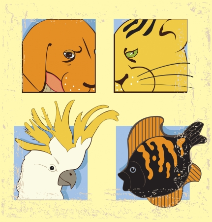 aquarian: Images of cat, dog, aquarian fish and cockatoo parrot on  vintage background