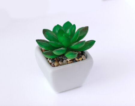Artificial succulent plant in ceramic pot on counter beside wall