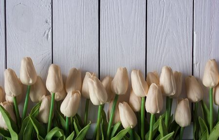 Tulips on wooden background for Valentines Day Horizontal place holder right for Advertising. Blooming Tulips left hand side