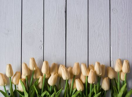 Bouquet of biege tulips on white wooden background. Top view, copy space