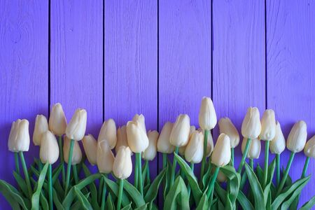 Bouquet of biege tulips on violet wooden background. Top view, copy space