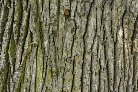 Old oak Wood Tree Texture Background Pattern