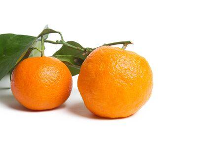 Verse, rijpe, biologische mandarijnen, clementines of mandarijnen met stengels en bladeren nog nat met waterdruppels op witte houten ondergrond, onbehandelde mandarijnen met kleine vlekken, vers geplukt