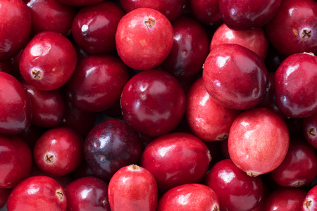 mountain cranberry: Close up, top view of fresh cranberries