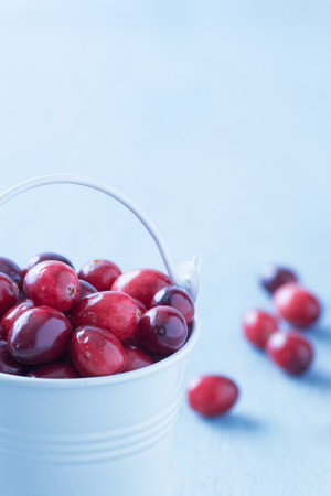 mountain cranberry: Fresh cranberries in a white bucket on a blue wooden table. Stock Photo