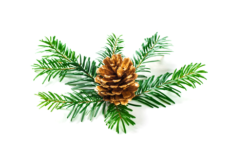 Fir tree branch and cones isolated on white background. Banco de Imagens