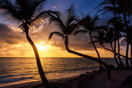 Palm trees at sunrise or sunset on the caribbean sea. Imagens
