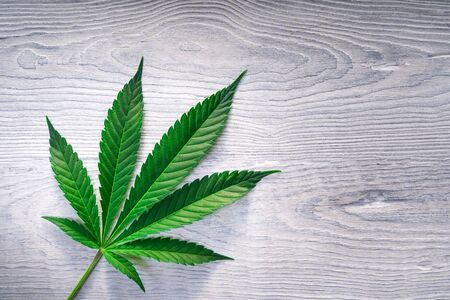 Cannabis leaves on old white wooden background - Top view