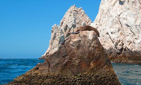 Sea Lion sunning and lounging on Pinnacle rock at Lands End at Cabo San Lucas Baja California Mexico BCS