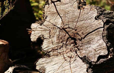 ameba: Amoeba-shaped wood cut