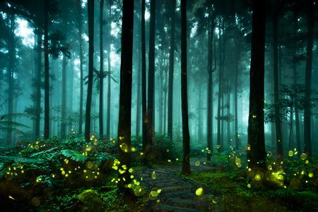 Firefly  Foto de archivo