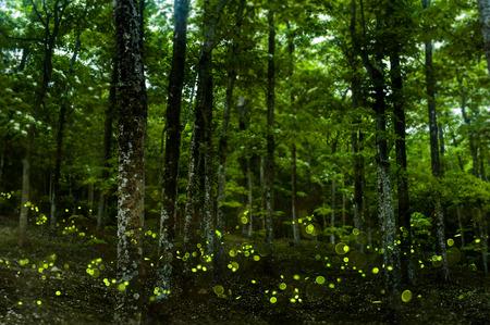 firefly: firefly Editorial