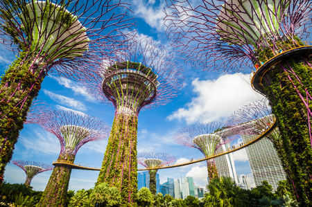 Supertree grove at garden by the bay in singapore 에디토리얼