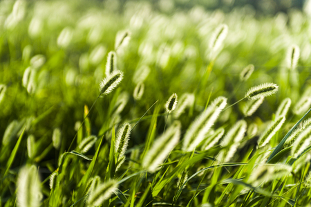 Greenery in penghu