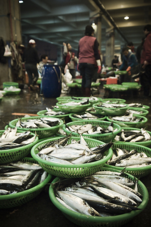 Workers at the Sinda fishing port manage fresh catches to be sold on the daily market.