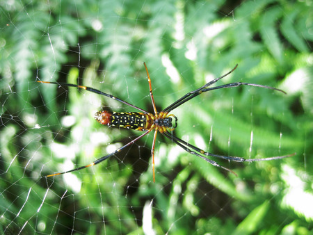 ploy: Giant woods spider