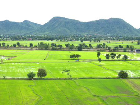 Green rice field in Thailand.top view Stock Photo