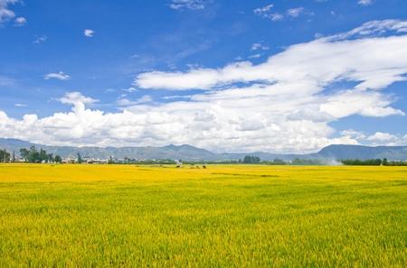 Rural scenery.Taken in the Dali Yunnan China