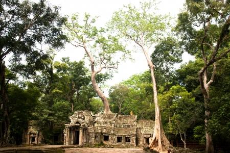 cambodge: ta prohm, ,siem reap ,Cambodia Stock Photo