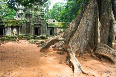 cambodge: ta prohm ,siem reap ,Cambodia Stock Photo