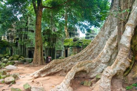 cambodge: ta prohm siem reap ,Cambodia