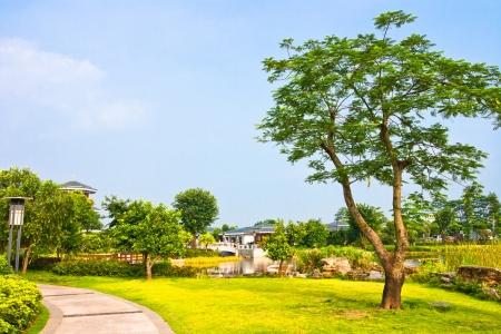 Chinese garden landscape  photo