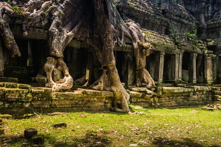khan: Preah Khan, siem reap, Cambodia