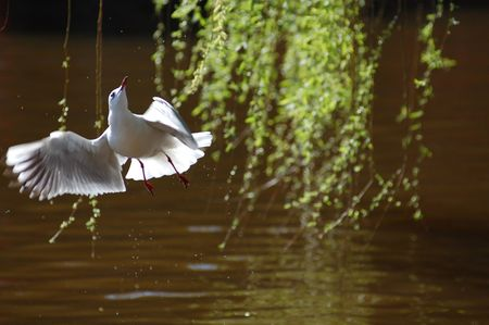 sea gull Stock Photo - 5015202
