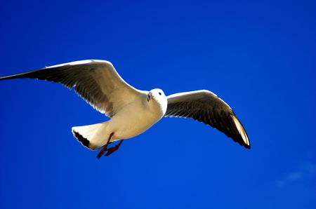 Under blue sky sea gull