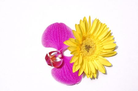 Butterfly orchid and chrysanthemum photo