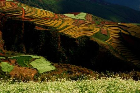 yunnan: Fields and garden,beautiful,In Yunnan, China Stock Photo