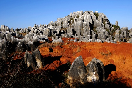 Stone  forest Stock Photo