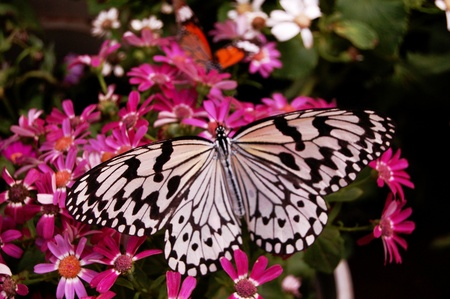 The butterfly on the flowers3