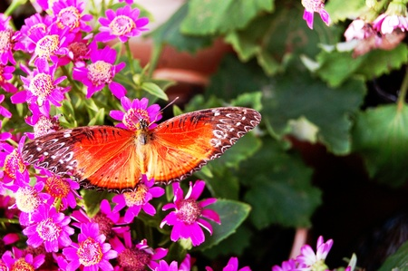 The butterfly on the flowers1