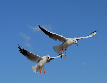 Two seagulls Stock Photo