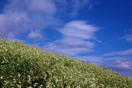pastoral: Pastoral scenery  Stock Photo