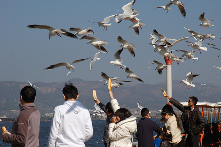 People with the seagulls ,in kunming,yunnan,china