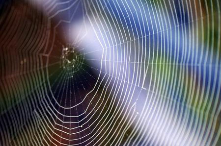 irradiation: Spider silk Stock Photo