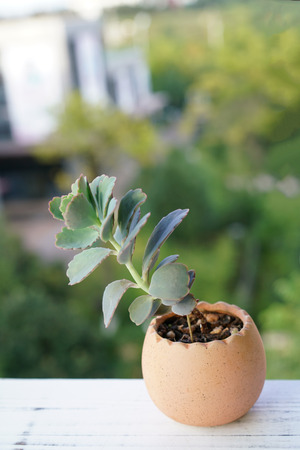 Succulent plants close up view