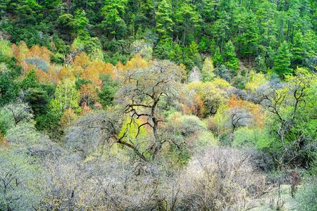 Primeval forest 版權商用圖片