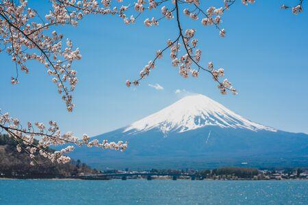 mt.Fuji in kawaguchiko lake,Kawaguchiko lake of Japan,Mount Fuji, Kawaguchi Lake, Japan,with,Spring Cherry blossoms, pink flowers,Cherry blossoms or Sakura and Mountain Fuji at the river in morning Standard-Bild