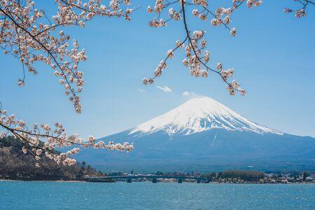 mt.Fuji in kawaguchiko lake,Kawaguchiko lake of Japan,Mount Fuji, Kawaguchi Lake, Japan,with,Spring Cherry blossoms, pink flowers,Cherry blossoms or Sakura and Mountain Fuji at the river in morning