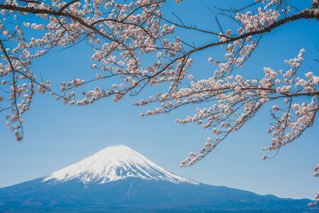 mt.Fuji dans le lac kawaguchiko,lac Kawaguchiko du Japon,mont Fuji, lac Kawaguchi, Japon,avec,fleurs de cerisier de printemps, fleurs roses,fleurs de cerisier ou Sakura et montagne Fuji à la rivière le matin
