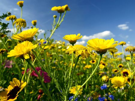 aerea: summer meadow Stock Photo